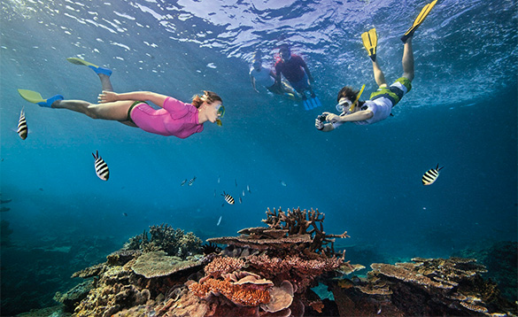 Snorkelling at great barrier reef/