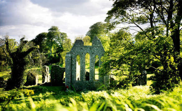 Sunlight highlighting the ruins of Inch Abbey surrounded by trees/
