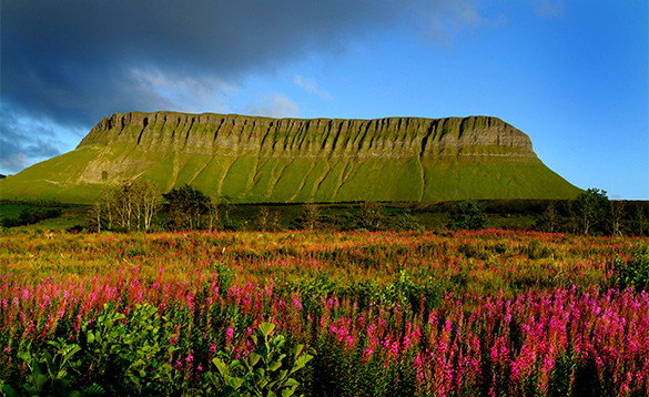 Flowers in full bloom at the foot of Benbulben Mountain in Sligo/