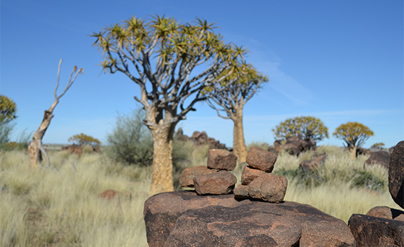 Namibian grassy landscape with trees and rocks. /