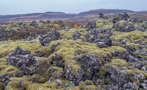 Moss covered lava field in Iceland/