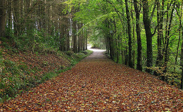 Country walks in County Monaghan/