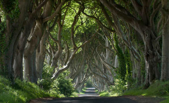 Pathway leading through an avenue of beech trees known as The Dark Hedges in Northern Ireland/
