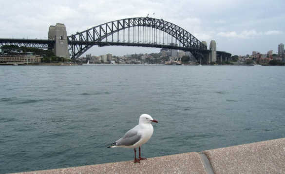 view of Sydney looking across to the Sydney Harbour Bridge/