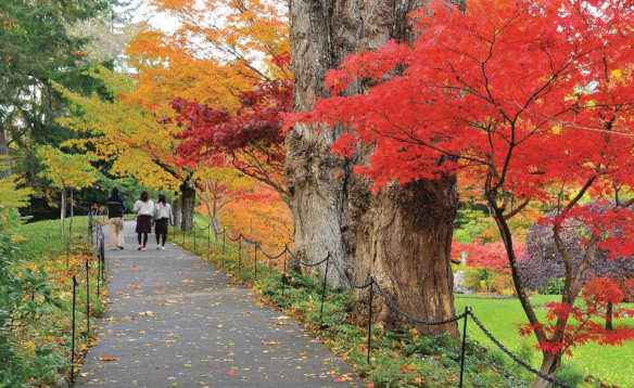 people walking along a path in a park at autumn with trees with red, yellow and orange leaves/