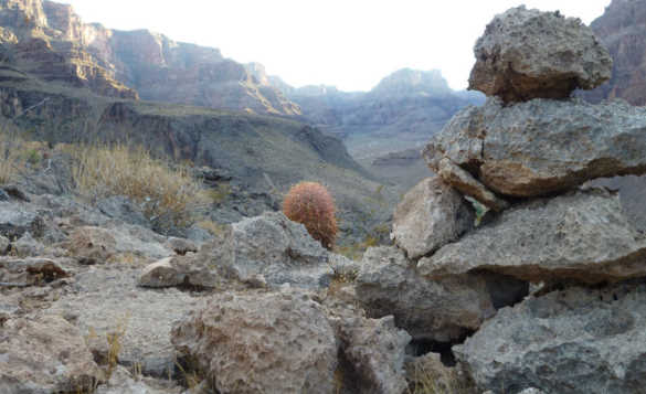 View of cactus and pile of rocks in the Grand Canyon/
