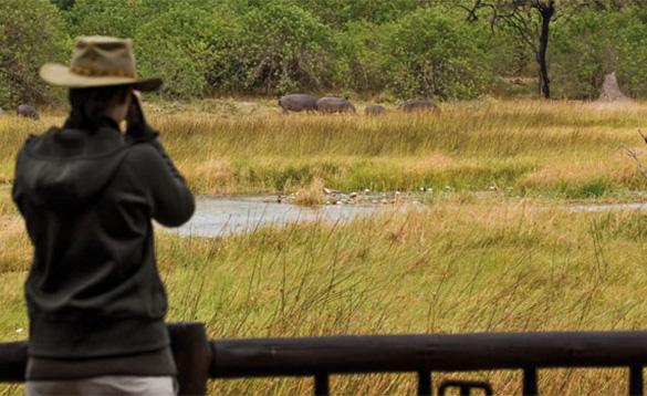Man standing on a veranda looking over grassland towards some grazing antelope/