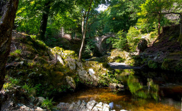 Stone bridge over a river flowing through Tollymore Forest in Northern Ireland/