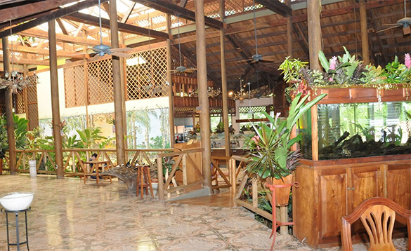 wooden veranda with tiled floor and plant pots with tropical plants and views of jungle/