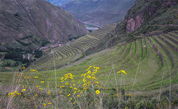 grass tiers leading up a mountainside in Peru/