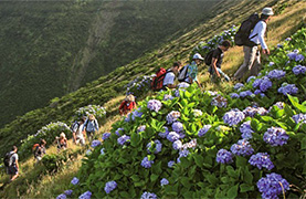 Guided Walking In The Azores