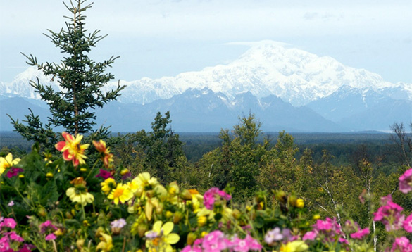 Views to Mount Denali from Talkeetna/