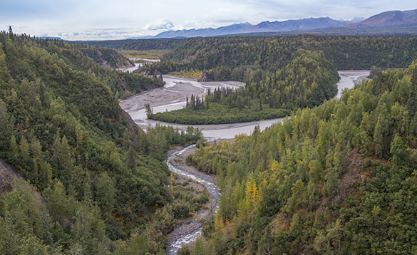 river meandering through pine forests with mountains in the background/