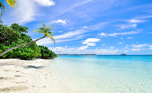 White sandy beach with palm trees/