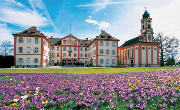 Crocuses in front of St Marien Church located on Mainau Island, Lake Constance, Germany/