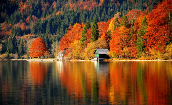 Autumnal trees reflected in Lake Bohinj in Slovenia/