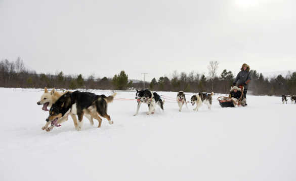 Team of huskies pulling a sled across snow in Finnmark/