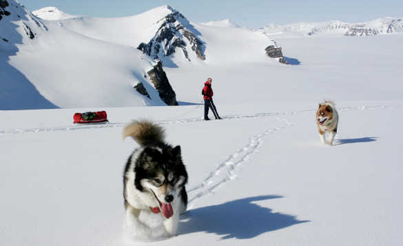Two dogs and a skier travelling across snow with mountains in the background in Spitsbergen, Norway/
