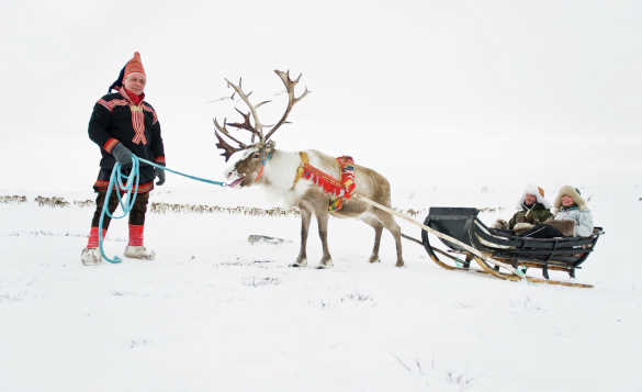 Couple in sledge being pulled by a reindeer led by a Sami man/