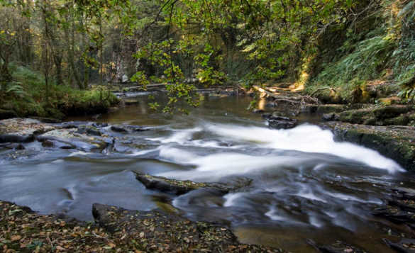 River flowing through the Clare Glens in Ireland/