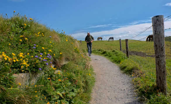 Man walking along a path beside horses grazing in a field in Doolin Co Clare/