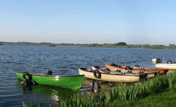 Group of rowing boats moored by the reed fringed edge of Lough Owel in Co Westmeath, Ireland/