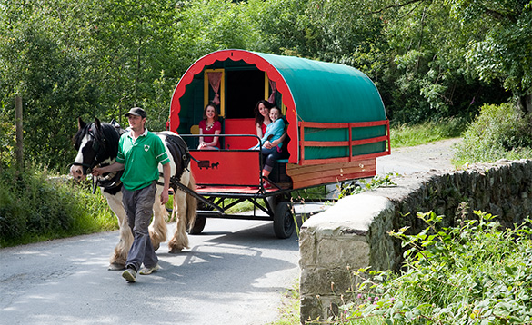 Horse and traditional Irish caravan walking along a country road in County Wicklow/