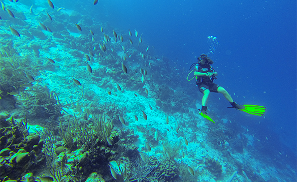 Diving swimming with fishes around the coral reefs/