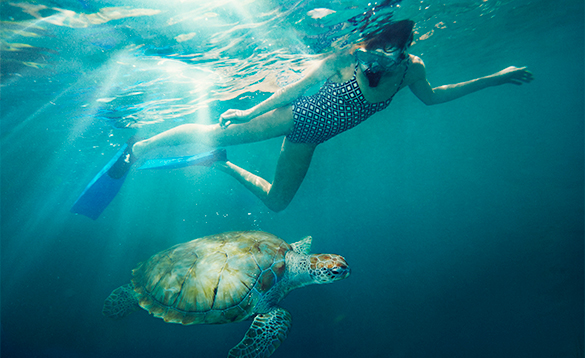 Lady snorkeling with a sea turtle around barbados/