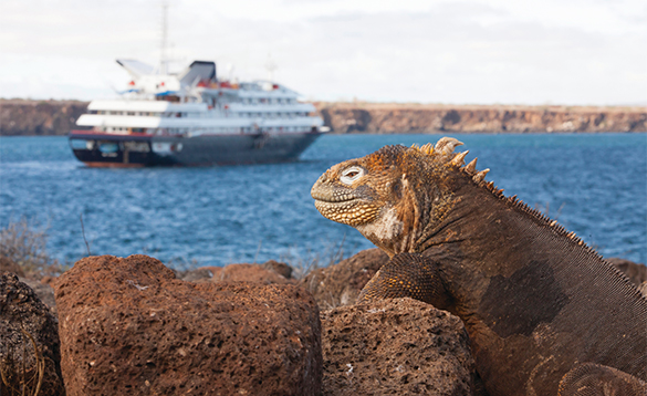 Silverseas cruise ship sailing past an iguana in the Galapagos Islands/