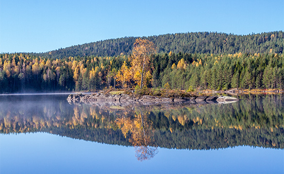 autumn forest reflected into clear water of a lake/
