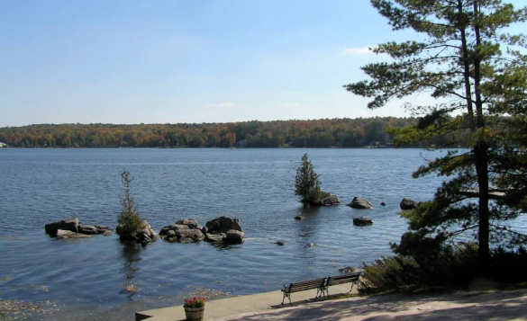 large lake surrounded by pine forests/