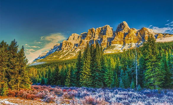 A rocky mountain towering over pine forest/