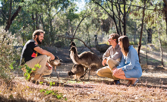 three people squatting on a dirt track with a group of small emus/