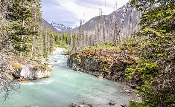 Icy blue river flowing past rocky shoreline and pine trees/
