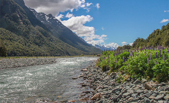 river flowing at the foot of mountains past a rocky shoreline with tall purple flowers/